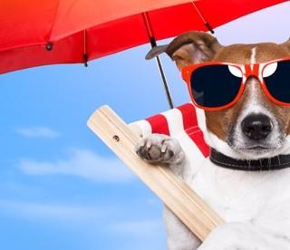 Viaggiare in traghetto per le Canarie con un cane
